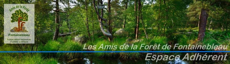 Site réservé aux Amis de la Forêt de Fontainebleau